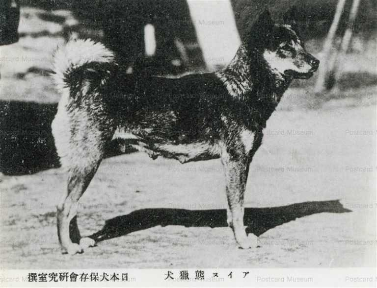 cga082-アイヌ熊獵犬