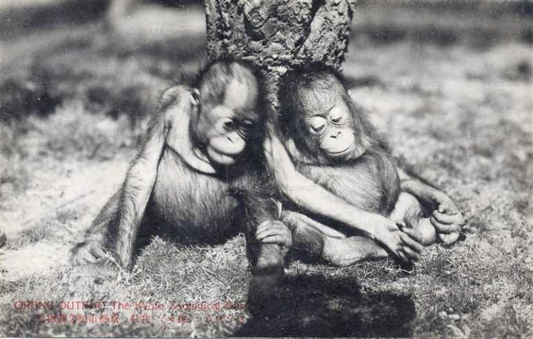 cg425-京都市紀念動物園