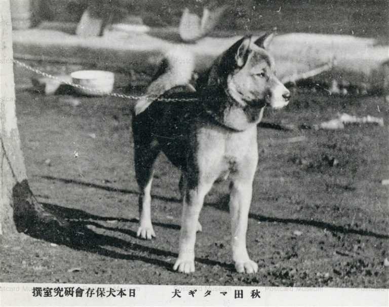 cga080-秋田マタギ犬