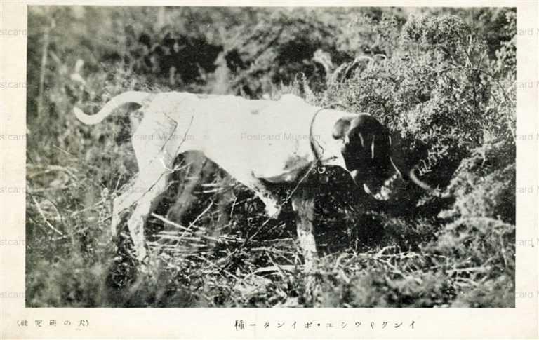 cga210-イングリッシュ・ポインター種 犬の研究社