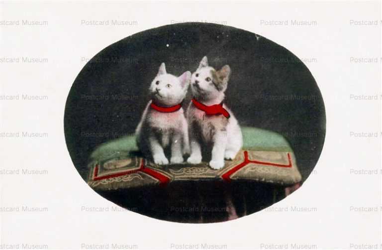 cat005-猫2匹