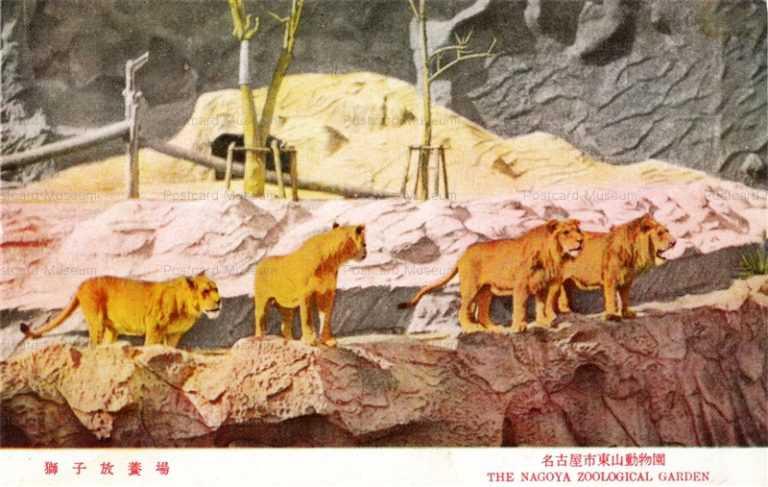 cg315-名古屋市東山動物園 獅子放養場