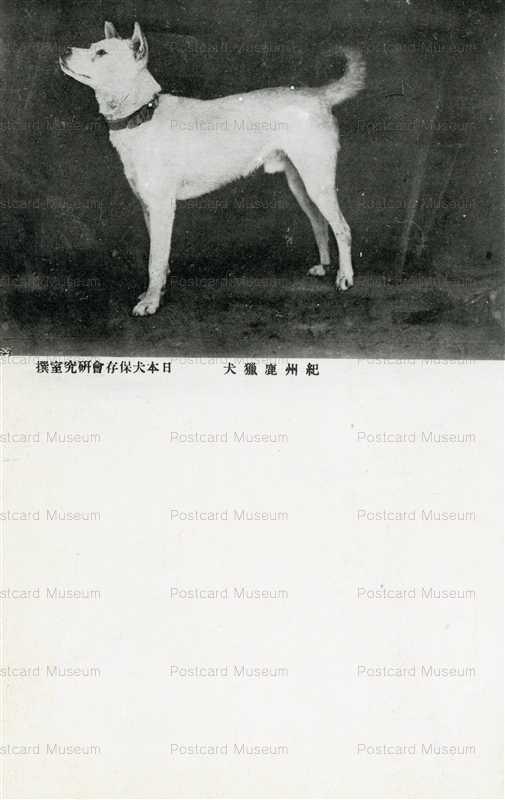 cga130-紀州虎猟犬