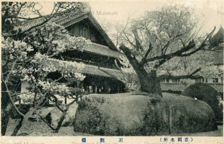 ei109-Ishiwarizakura 石割桜 盛岡