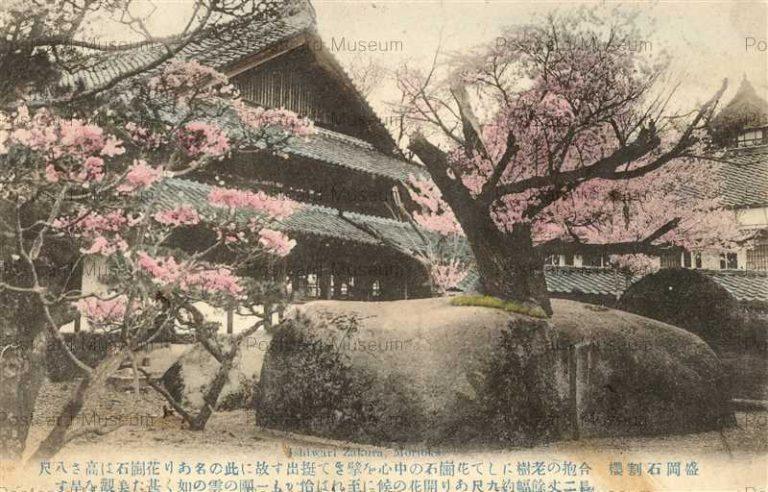ei110-Ishiwarisakura Morioka 石割桜 盛岡