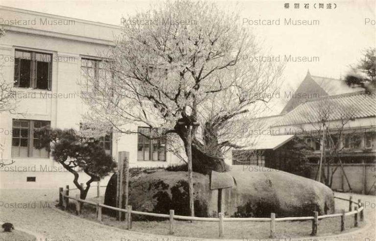 ei113-Ishiwarizakura Morioka石割桜 盛岡 地方裁判所前庭