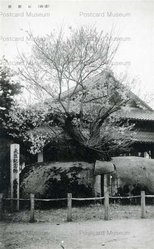 ei115-Ishiwarizakura Morioka 石割桜 盛岡