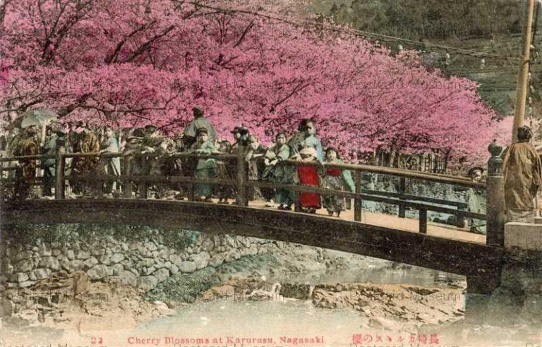 na275-Cherry Blossoms at Karurusu,Nagasaki 22 長崎カルルスの桜