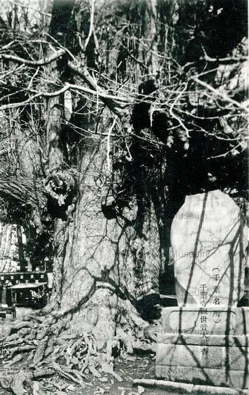 lb215-Chibaji Kanzeon Oicho 千葉寺観世音大銀杏 千葉名所