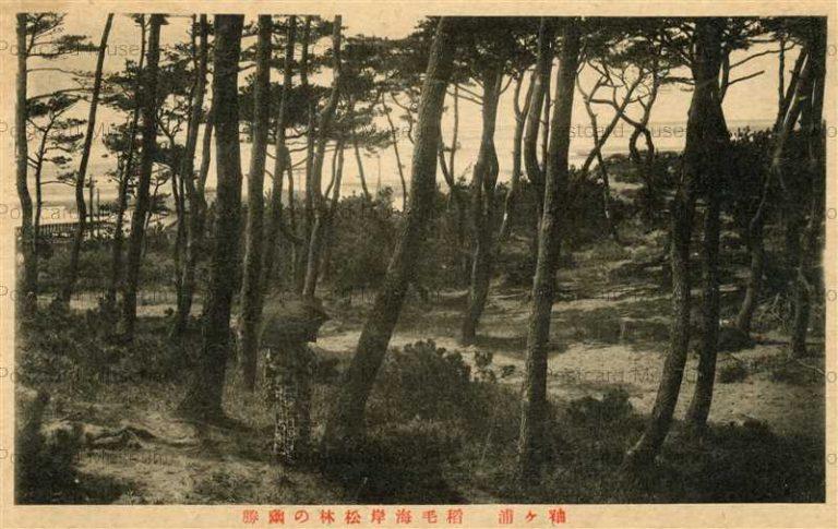 lb590-Inage kaigan Sodegaura Chiba 稻毛海岸松林の幽勝 袖ヶ浦 千葉