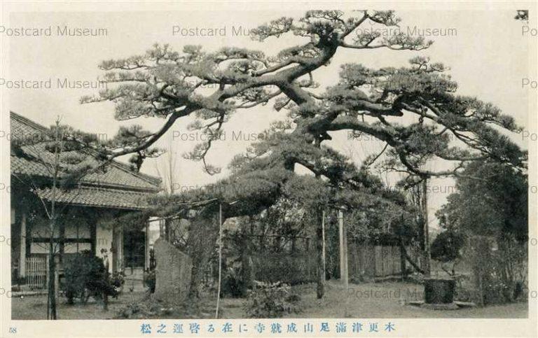 lb745-Manzokuyama Johjuji Pine Kisarazu Chiba 木更津滿足山成就寺に在る啓運之松
