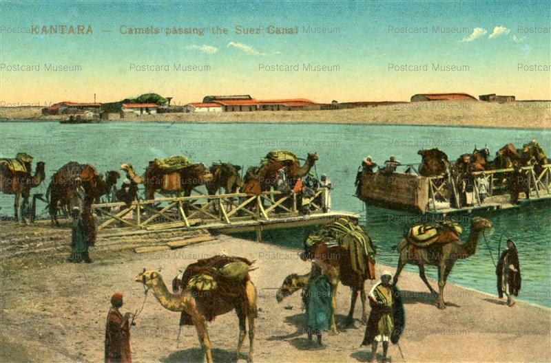 gp182 kantara camels passing the suez canal 絵葉書資料館