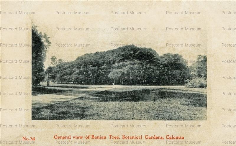 ind031-General view Banian Tree Botanical Gardens Calucutta