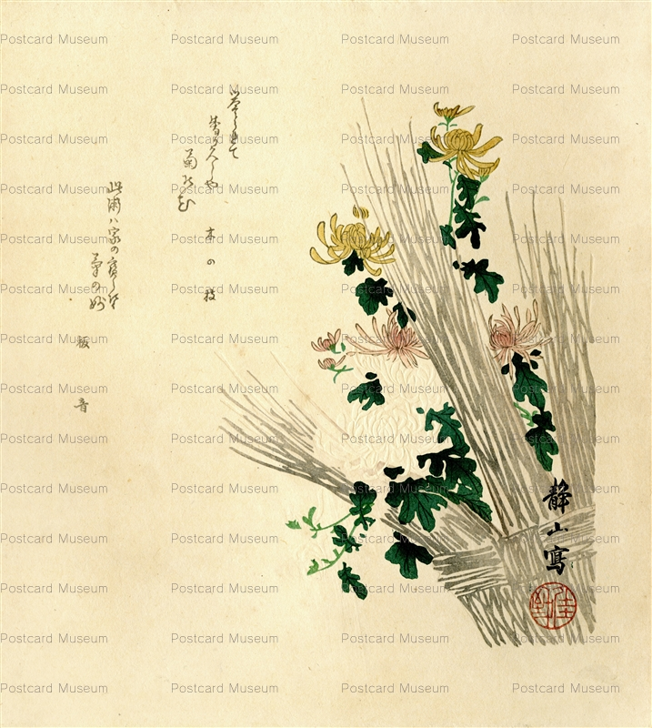 ukt350-静山 菊