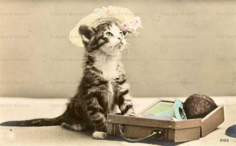 ac013-Cat Hat Fation