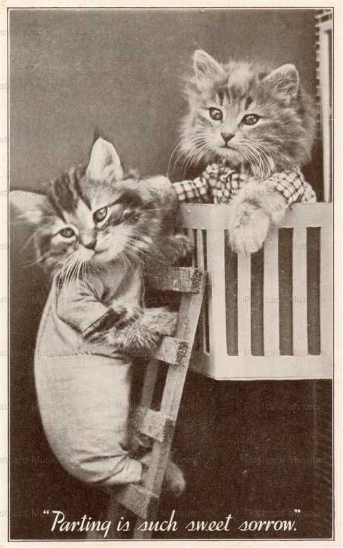 acb003-Real Photo Postcard Two Dressed Cat Kittens