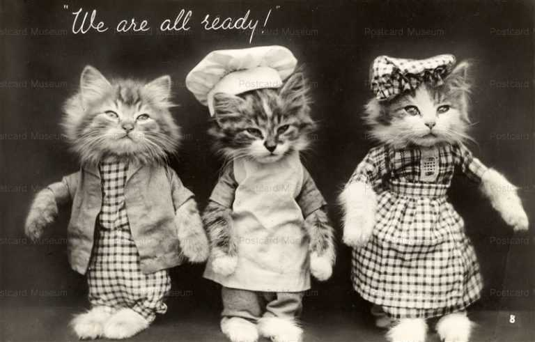 acb007-Dressed Cats Ready We are All Ready