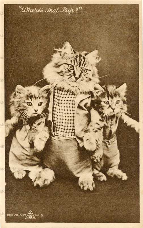 acb011-Dressed Cats Wretling for Punk Fight Where´s That Pup