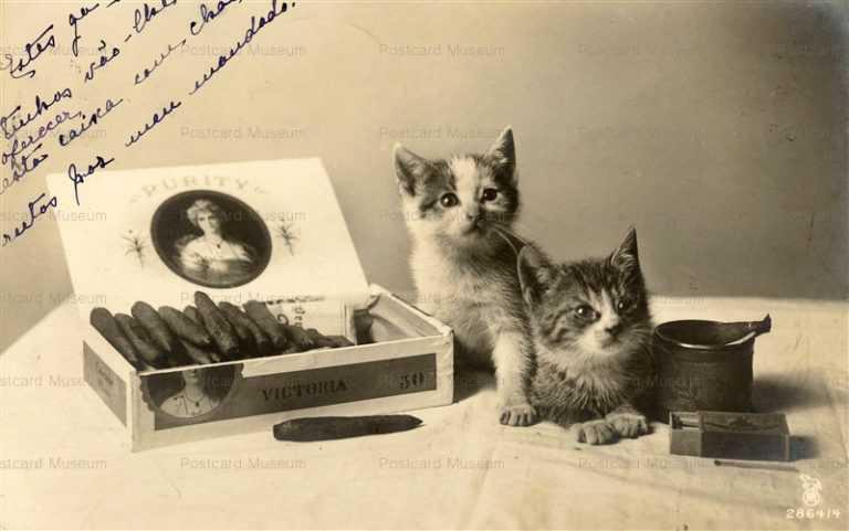 acb025-Cat Kittens Cigar Matchbox