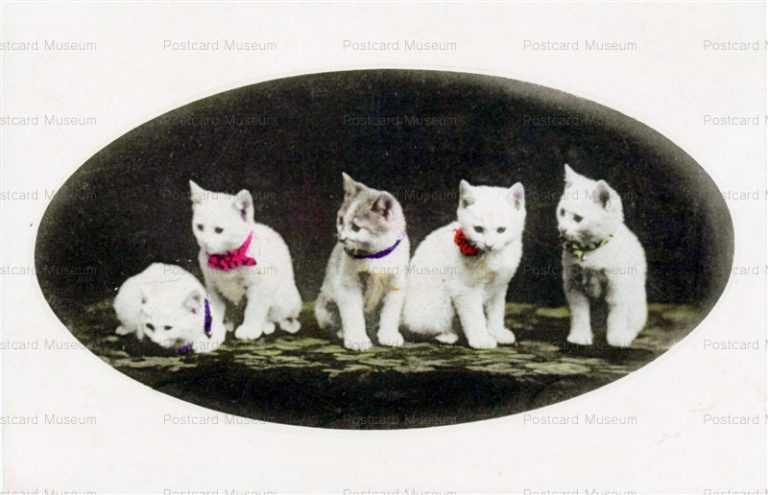 cat445-白猫5匹