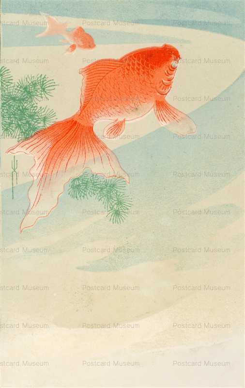 cka430-金魚