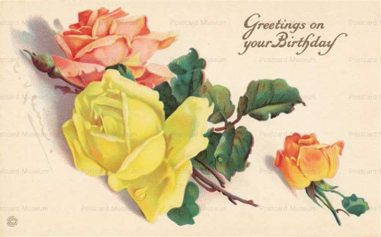 em062-Catherine Klein Rose Birthday Yellow