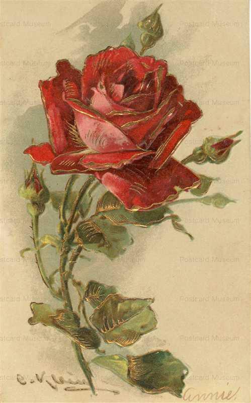 em082-Catherine Klein Red Rose