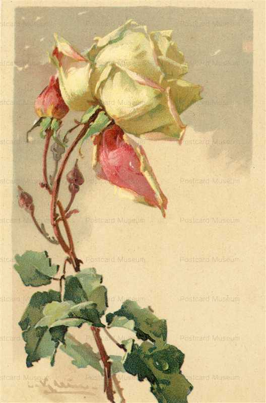 em083-Catherine Klein Yellow Rose