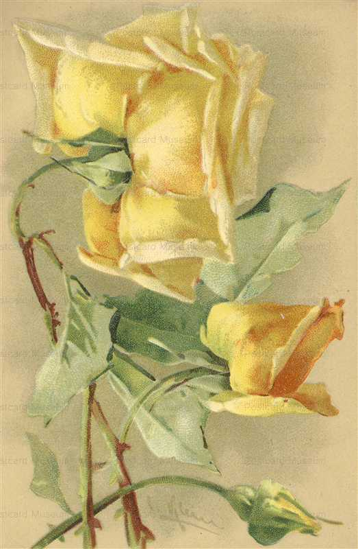em091-Catherine Klein Gorgeous Yellow Rose From Behind