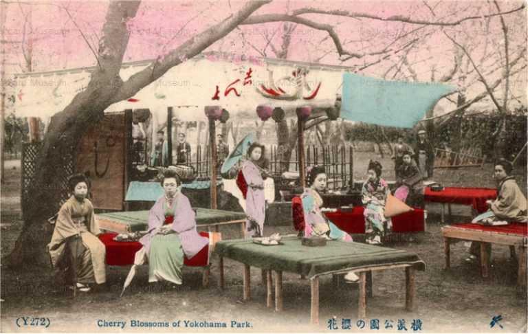 fh015-横浜公園の桜花
