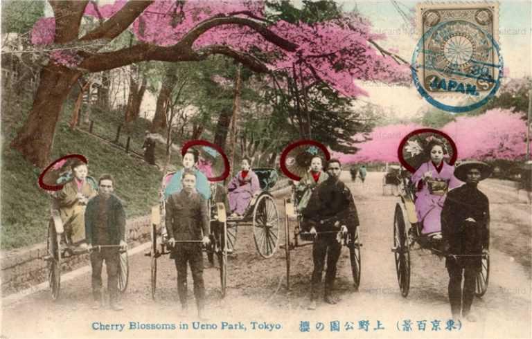 fj012-人力車 上野公園の桜 東京百景
