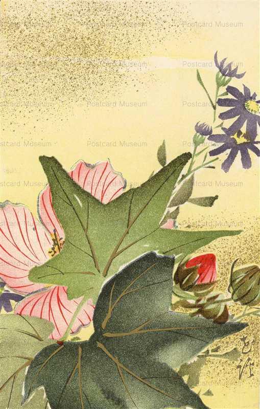 kfg006-Cotton Rose 芙蓉