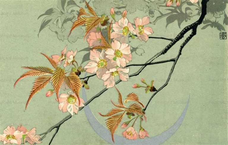 kfg210-桜