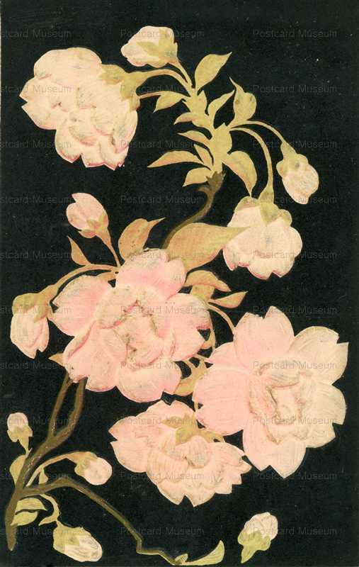 kfg290-桜