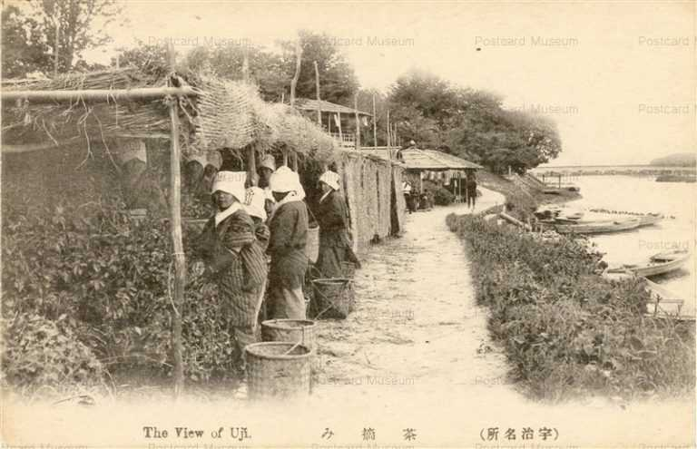 kfb038-Uji 茶摘み 宇治 京都