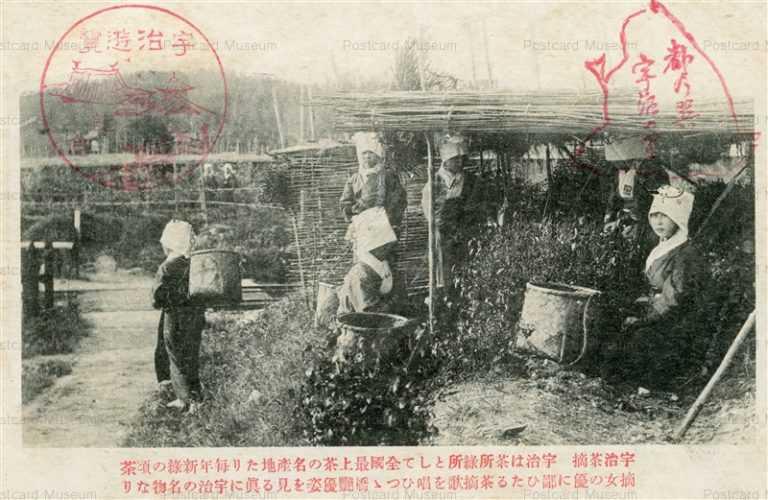 kfb045-Uji Tea Gather 宇治茶摘
