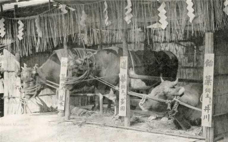 cg150-牛舎 品評