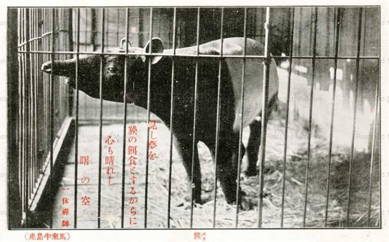 cg380-有竹巡回動物園 獏 馬来半島産1