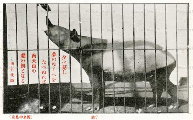 cg375-有竹巡回動物園 獏 馬来半島産