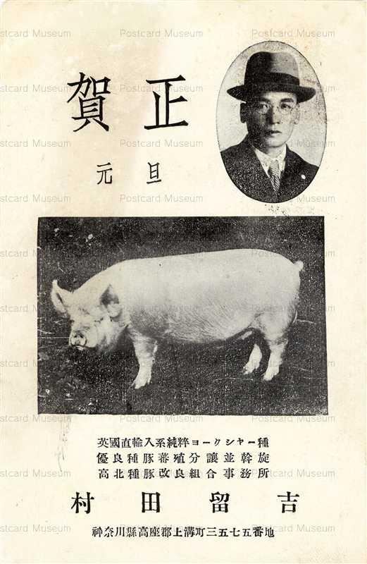 cg455-賀正 豚 ヨークシャー種