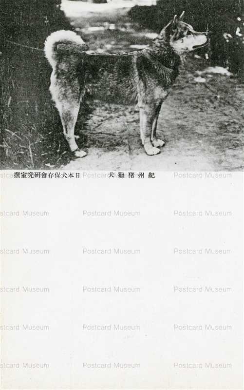 cga110-紀州猪猟犬