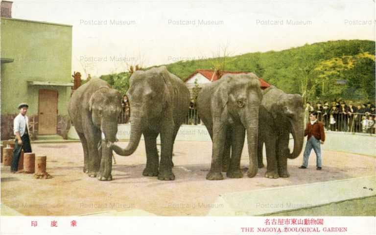 cg330-名古屋市東山動物園 印度象