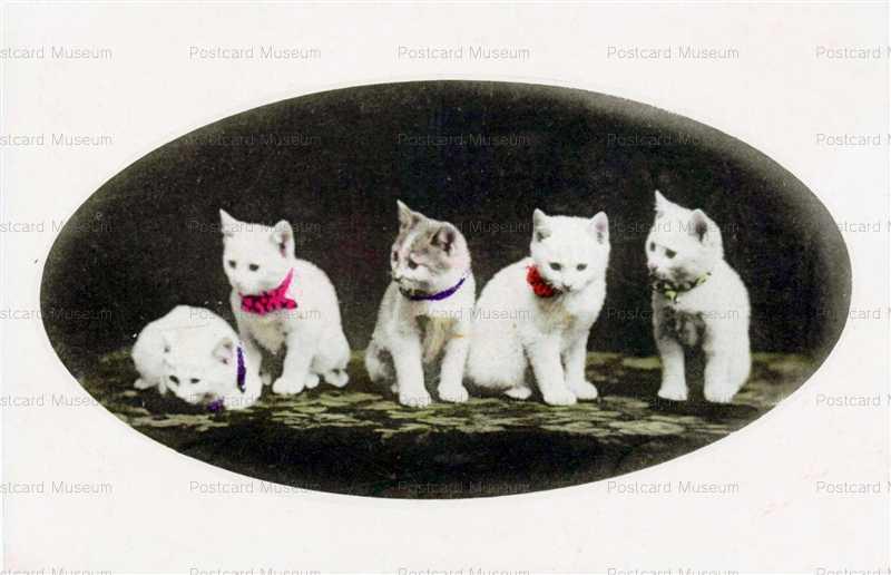 cat004-白猫5匹