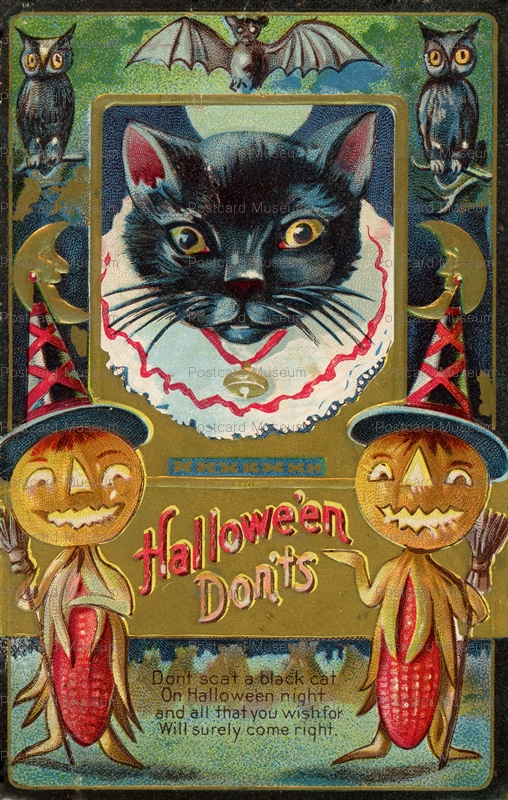 chr120-Halloween Dont's! Don't Scat a Black Cat On Halloween Night and all that you wish for Will surely come right.