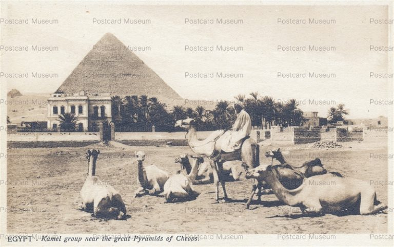 gp020-Egypt Kamel Group near the Great Pyramids of Cheops