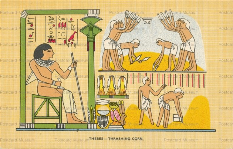 gp550-Thebes thrashing Corn